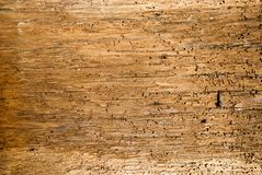 Old wooden boards background full of shipworm holes Stock Photos