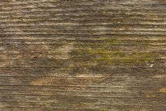 Old wooden boards have mold. royalty free stock photo