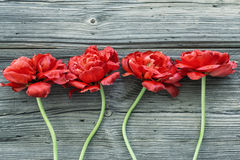 Old wooden  boards with red flowers Stock Photography