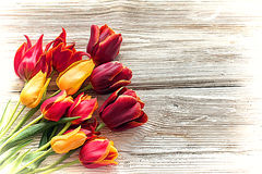 Old wooden  boards with tulips Stock Photo