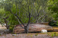 Old wooden boat ashore beneath trees Stock Images