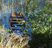Old wooden boat on the edge of the lake, reeds, grassunusable, f Stock Image