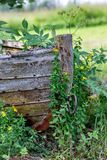 Old wooden boat and green plants. Finland Royalty Free Stock Photography