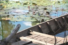 Old wooden boat in a lotus flowers swamp. An old wooden boat in a lotus flowers swamp Stock Image