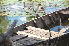 Old wooden boat in a lotus flowers swamp. An old wooden boat in a lotus flowers swamp Stock Photos