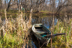 Old wooden boat with oars. On the river bank among the sedge Royalty Free Stock Photography