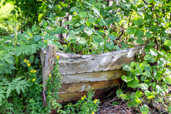 Old wooden boat and plants Stock Image