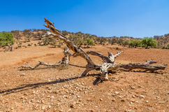 Old wooden branch on sand in desert Stock Photos