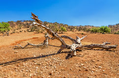 Old wooden branch on sand in desert Stock Photography