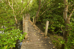 Old wooden bridge. In the forest Stock Photos