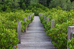 Old wooden bridge. In the forest Stock Photo