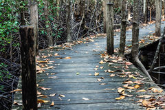Old wooden bridge. In the forest Royalty Free Stock Photography