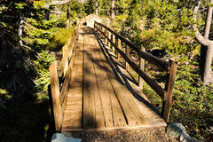 Old wooden bridge in forest with sunshine Royalty Free Stock Images