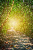 Old Wooden Bridge In between mangrove forest Royalty Free Stock Image