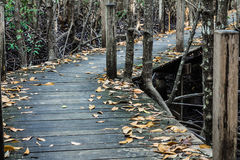 Old wooden bridge. In the mangroves Stock Image