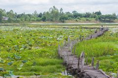Old wooden bridge over the lake,Kea Dam,Mahasarakham,. Thailand Stock Images