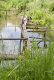 Old wooden bridge over the lake overgrown with grass Royalty Free Stock Images