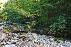 Old wooden bridge over a mountain creek in forest Stock Photo