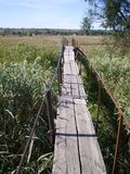 Old wooden bridge in the reeds over the creek royalty free stock photo