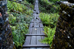 Old wooden bridge. A old bridge with some holes and lost planks on the Annapurna trek Stock Images