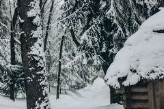 Old wooden cabin in Norway located in winter woods, rustic wood Royalty Free Stock Photo