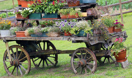 Old wooden cart decorated with many flowers Stock Photos