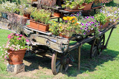 Old wooden cart full of blooming flowers in the Meadow Royalty Free Stock Photography