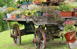 Old wooden cart with many flowers in the summer Royalty Free Stock Photography