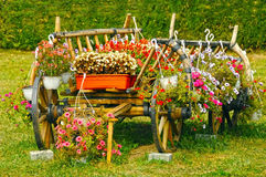 Old wooden cart overflowing with red flowers Royalty Free Stock Photo