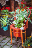 Old wooden chair with flowers. Old wooden chair on the pavement flowerpots decorated with white and red flowers Stock Image