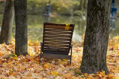 Old wooden chaise longue among fallen autumn leaves on the shore near the water. Atmospheric vintage landscape, relax. Old wooden chaise longue among fallen stock images