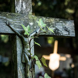 Old wooden cross with cemetery ivy - square. Stock Images