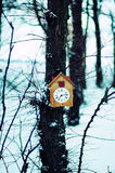 Old wooden cuckoo clock hanging on a tree  Stock Photos