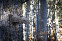 Old wooden direction sign on tree Stock Images