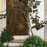 Old wooden door on a background of white walls Stock Photography