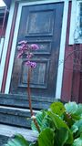 Old wooden door with a flower in finland stock photo
