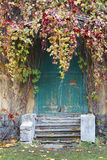 Old wooden door in the house, twined wild grapes. Royalty Free Stock Photography
