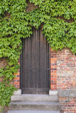 Old wooden door with ivy Stock Photo