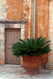 Old wooden door and palm in terracotta pot Royalty Free Stock Image