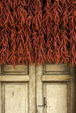 Old wooden door with red pepper at the sun Stock Image