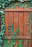 Old wooden door with small plants growing on Stock Images