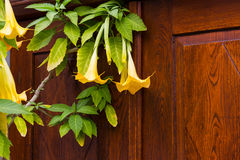 Old wooden door with yellow flowers royalty free stock photos
