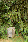 Old wooden dustbin at pine Royalty Free Stock Photo