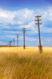 Old wooden electric pillar in the field Royalty Free Stock Photo