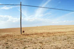 Old wooden electric pillar in the field Royalty Free Stock Photos