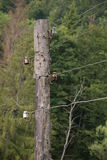 Old wooden electric pole Stock Image