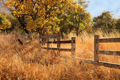 Old Wooden Farm Fence. Picture of Old Wooden Farm Fence in Long Yellow Winter Grass stock images