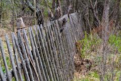Old wooden fence background in black and white Stock Photos
