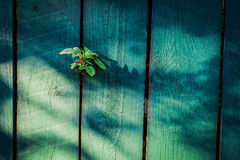 Old wooden fence background. Old green wooden fence background Royalty Free Stock Image