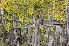 Old wooden fence on a background of yellow foliage. Old dilapidated wooden fence on the background of yellow foliage Stock Photography